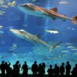 Огромный аквариум — «Dubai Mall Aquarium», Дубай (ОАЭ)