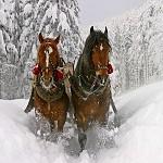 Самые популярные внутренние направления в зимнем сезоне