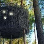 В Подмосковье появятся мини-отели на деревьях