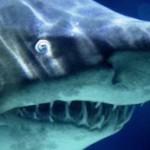 Бассейн с акулами открылся в Эйлате