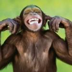 В индийском аэропорту два дня ловили обезьян