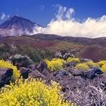 Турпоток на Тенерифе упал на 7% в 2014 году