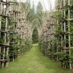 Живой собор из растений «Cattedrale Vegetale», Италия