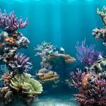 Остров Пхукет: фото