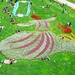 Фестиваль тюльпанов в Стамбуле от Divi & Corporate Travel