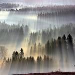 Лучи солнца в туманном лесу Польши и Чехии