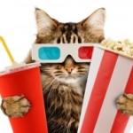 Первый в мире кинотеатр с кошками появится в Лондоне