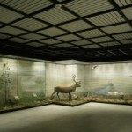 «Ночь в музее» пройдет в Москве 16 мая