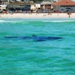 Турист победил в схватке с акулой