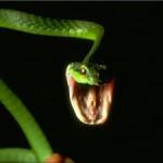 Четырехметровая кобра заползла в номер отеля на Пхукете