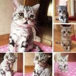 Кошка-пессимист стала новой звездой интернета