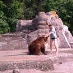 Мужчина напал на медведя в зоопарке Варшавы