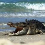 Крокодил напугал россиян в Гоа