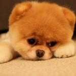 Собакам запретили лаять во время сиесты в Италии