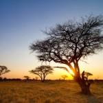 Турист застрелил живого символа Зимбабве во время сафари