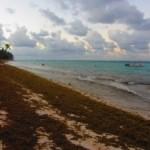 Водоросли не дают туристам отдыхать на пляжах Доминиканы