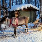Автобусное путешествие по Финляндии для каждого