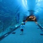 Дубайский океанариум