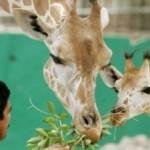 В Дубае откроется новый зоопарк