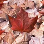 Воссоединение семей в Канаде: как иммигрировать?