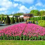 Голландия: королевский парк цветов Кёкенхоф