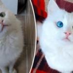 Эксперты выбрали самого красивого в мире кота