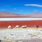 Российским туристам больше не нужны визы для поездок в Боливию