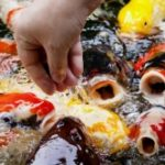 Россиянке грозит тюрьма за кормление рыб в Таиланде