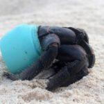 Остров Хендерсон – самый загрязненный необитаемый остров в мире